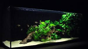 Dramatic Aquascapes 28 Modern Fish Tanks That Inspire Relaxation Aquariums Discus