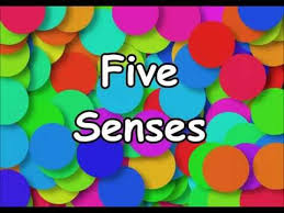 best 25 five senses kindergarten ideas on pinterest 5 senses