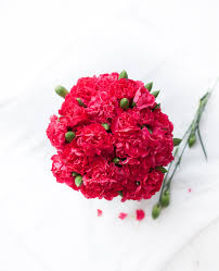 how to make a carnation look not like a carnation oh so delicioso