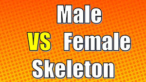 Male And Female Anatomy Differences Female Skeleton Vs Male Difference Between Female Skeleton And
