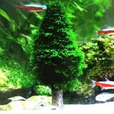 Aquascape Tree Realistic Chrismas Tree For Aquascape Pets Supplies On Carousell