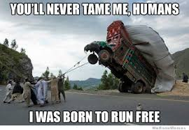 Humans Meme - you ll never tame me humans weknowmemes