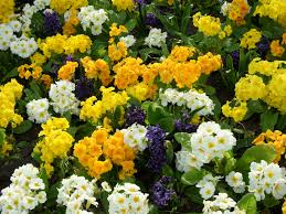 beautiful flower images free beautiful flowers image for download