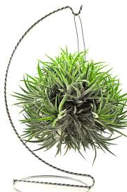 Plants Indoor by 191 Best Air Plants Images On Pinterest Air Plants Indoor