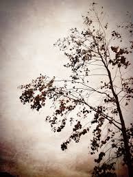 vintage tree by izzie hill on deviantart