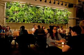 plants on walls vertical garden systems for back wall