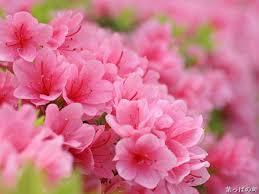 Flower Com Sweet Flowering Hd Flower Photography Vol 05 Wallcoo Net