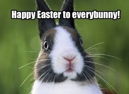 Funny Easter Memes - funny easter bunny fishwolfeboro