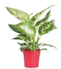 6 common home and garden plants that are poisonous to your pets bt