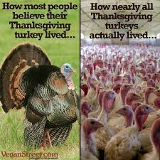 64 best thanksgiving images on animal rights animal
