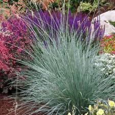 top plants that thrive in clay clay soil grasses and clay