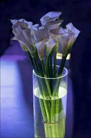 1455 best calla lily images on pinterest calla lily lilies and
