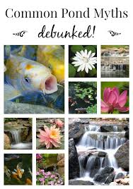 How To Make A Koi Pond In Your Backyard by Koi Pond Archives Aquareale Pond Blog