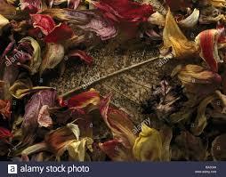 leaf petals close up dried potpourri magnolia leaf decomposition