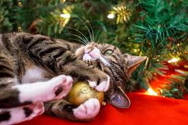 cat christmas how to keep your cat out of the christmas tree safebee
