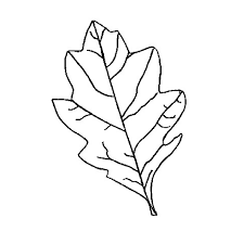 oak leaf outline printable clipart free to use clip art resource 2