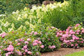 types of hydrangea diy