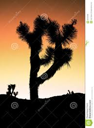joshua tree sunset stock photo image of climate nature 26165298