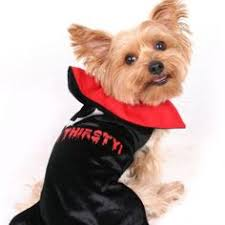 Yorkie Costumes Halloween Mouse