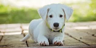 cuccie per cani tutte le offerte cascare a fagiolo cucce per cani ikea stunning dog design nel sottoscala with cucce