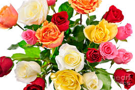 Bouquet Of Roses Bouquet Of Roses From Above Photograph By Elena Elisseeva