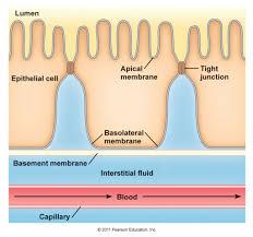 basement membrane basement ideas u0026 designs
