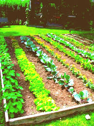 small kitchen garden ideas small kitchen garden design ideas vegetable garden trends 2018