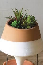 modern plants woodwaves