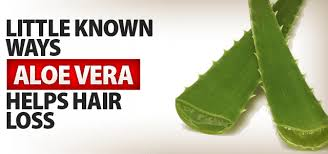 aloe vera plant facts aloe vera for hair loss facts and benefits har vokse