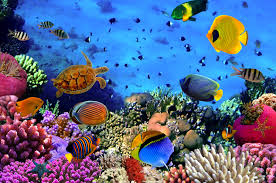 see the great barrier reef and all its wonders buckitdream