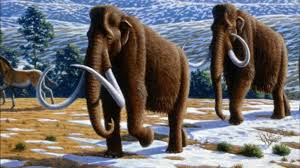 potential revive extinct animals raises ethical questions pbs