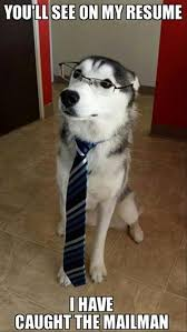 Dog With Glasses Meme - dog interviews for job i can has cheezburger