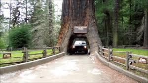 Chandelier Drive Through Tree Drive Thru Giant Redwood Tree Video Leggett Ca Reviews California