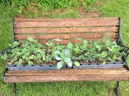 Strawberry Garden Beds Finished Project Strawberry Plants In Square Foot Gardens U2014 Day