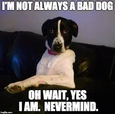 Bad Dog Meme - the most interesting dog in the world imgflip