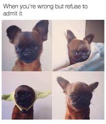 I Can Has Cheezburger Meme - 29 animal memes that are guaranteed to make you giggle i can has