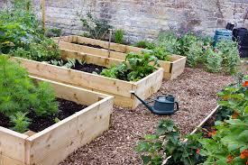 how to start a backyard veggie patch u2014 homely