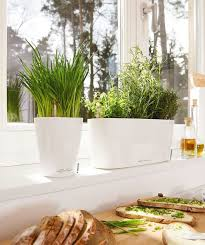 indoor windowsill planter 37 best lechuza planters images on pinterest indoor plant pots