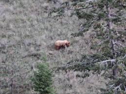 Idaho Hunting Unit Map Spring Curve Ball Hunting Idaho Articles Bear Hunting Magazine