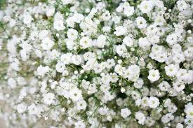 white flower centerpieces filler flowers for wedding bouquets