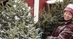 christmas tree prices growers grateful for higher christmas tree prices