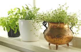 Plants To Grow Indoors 6 Absolute Easiest Herbs To Grow Indoors Rodale U0027s Organic Life