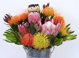 Protea Flower 8 Long Stem Gift Box Of Protea Flowers Protea Flower Arrangement