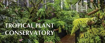 Unusual Tropical Plants - tropical plant conservatory and rare plant house