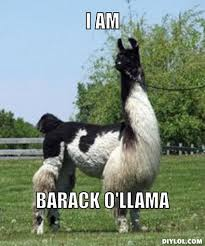 Llama Meme - does your llama have a name page 7 babycenter
