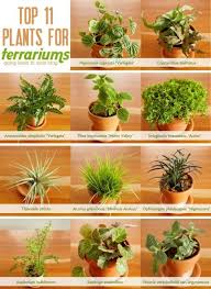 3 answers what are good plants for a closed terrarium quora