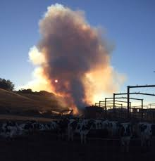 North Bay Fire Report by Dairy Farm Fire Comes At Tough Time For North Bay Milk Industry