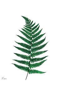 the 25 best fern tattoo ideas on pinterest body tattoos nature