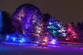 illumination tree lights at the morton arboretum giveaway me