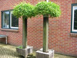 planters combined with climbing plant columns made in holland by